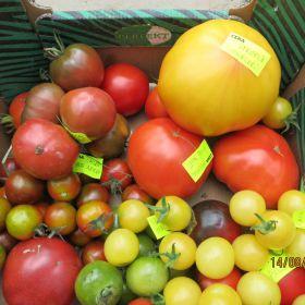 POMIDORY i papryki – ponad 600 odmian ze świata – oferta na sezon 2021 !
