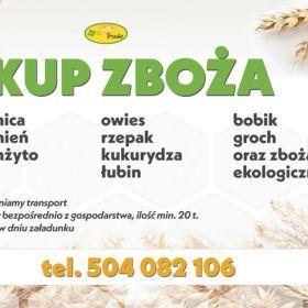 Skup zboża paszowego i konsumpcyjnego  pszenicy pszenżyta owsa jęczmienia żyta grochu łubin słodki i gorzki również ekologiczne min 20t zapewniam tra
